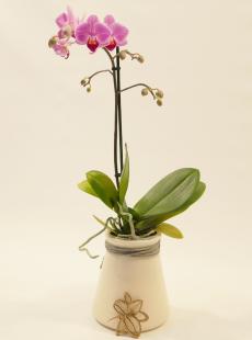 Orchid In Pearl Table StemGem Vase