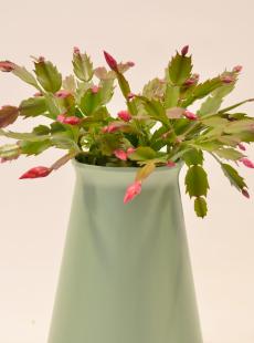 StemGem Aqua Recyclable Vase